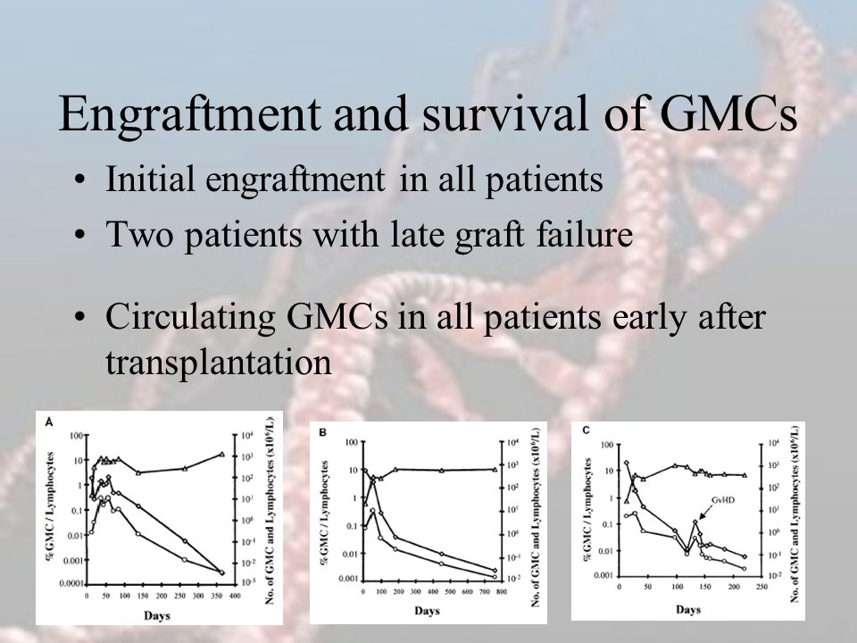 Engraftment and survival of GMCs