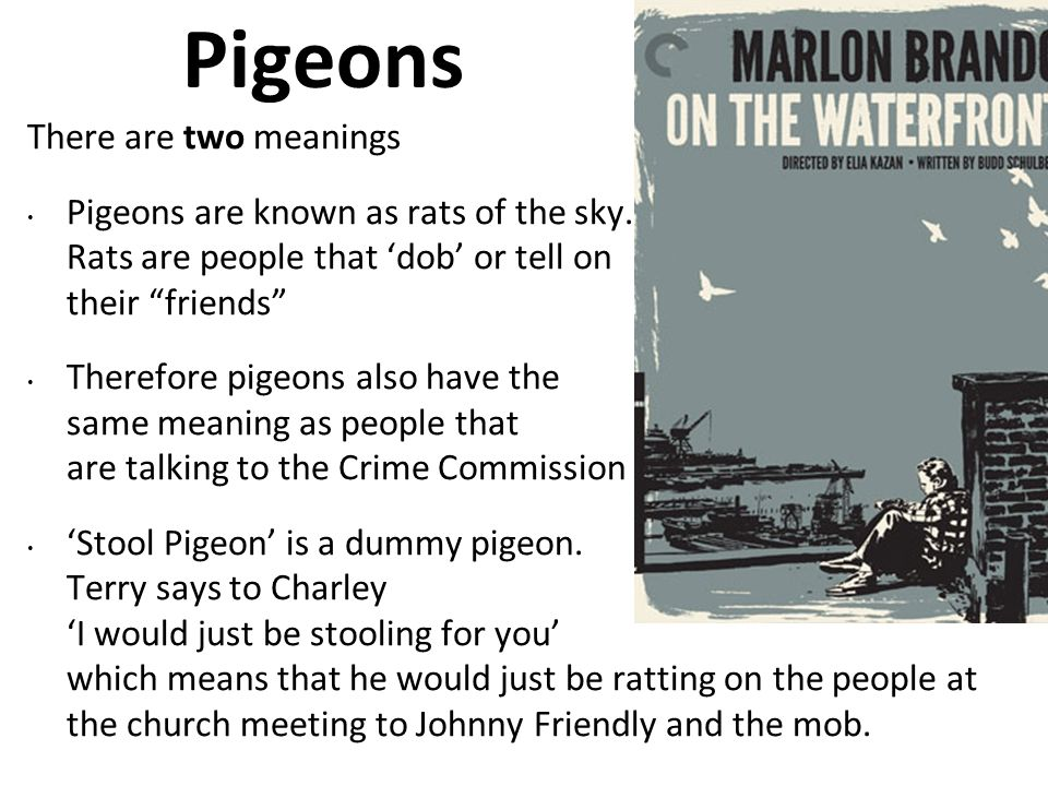 Pigeons There are two meanings