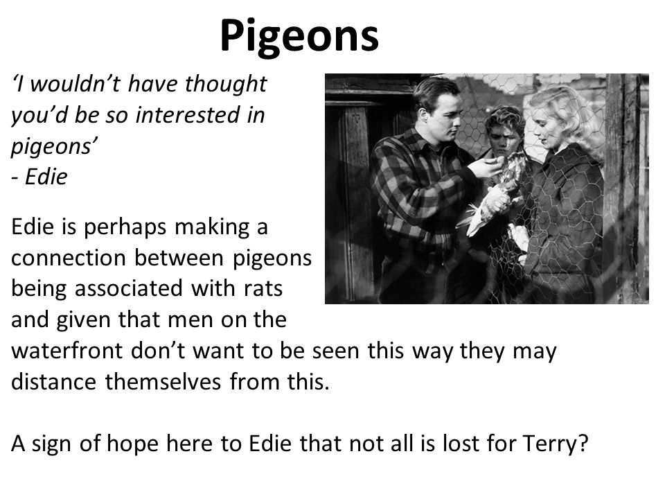 30:54 Pigeons. 1313. 'I wouldn't have thought you'd be so interested in pigeons' - Edie.