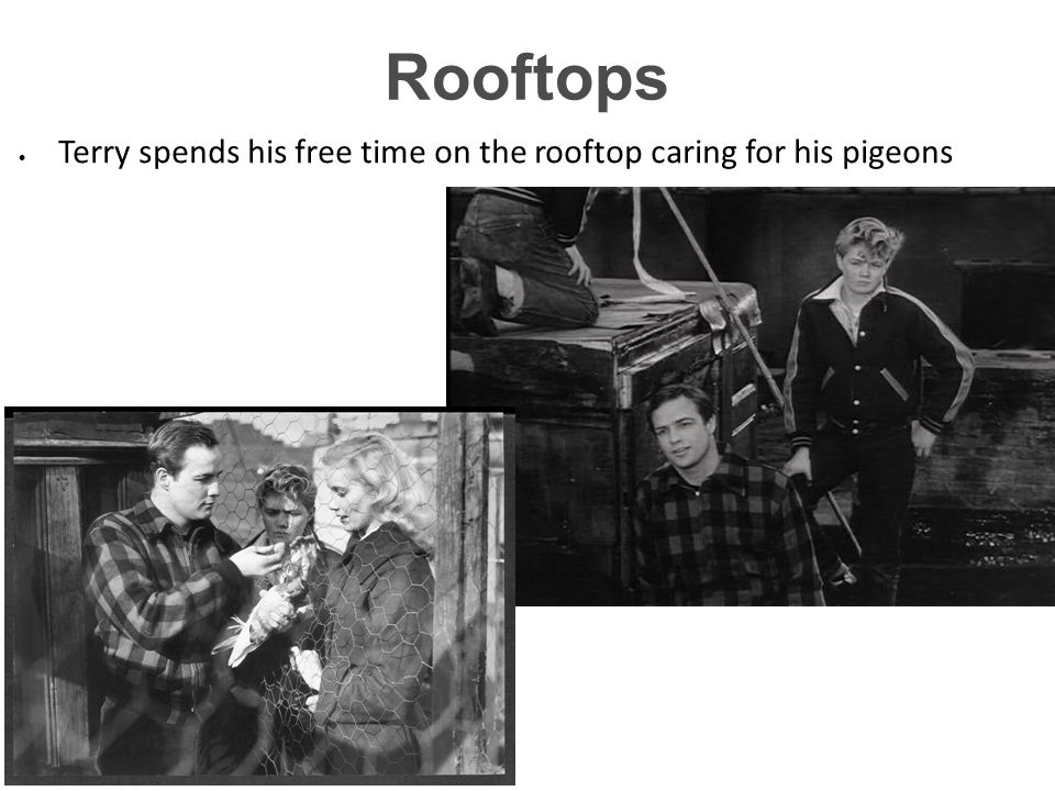 1919 55:18 Rooftops Terry spends his free time on the rooftop caring for his pigeons