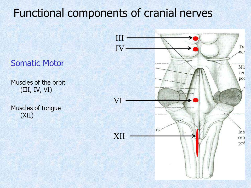 Functional components of cranial nerves