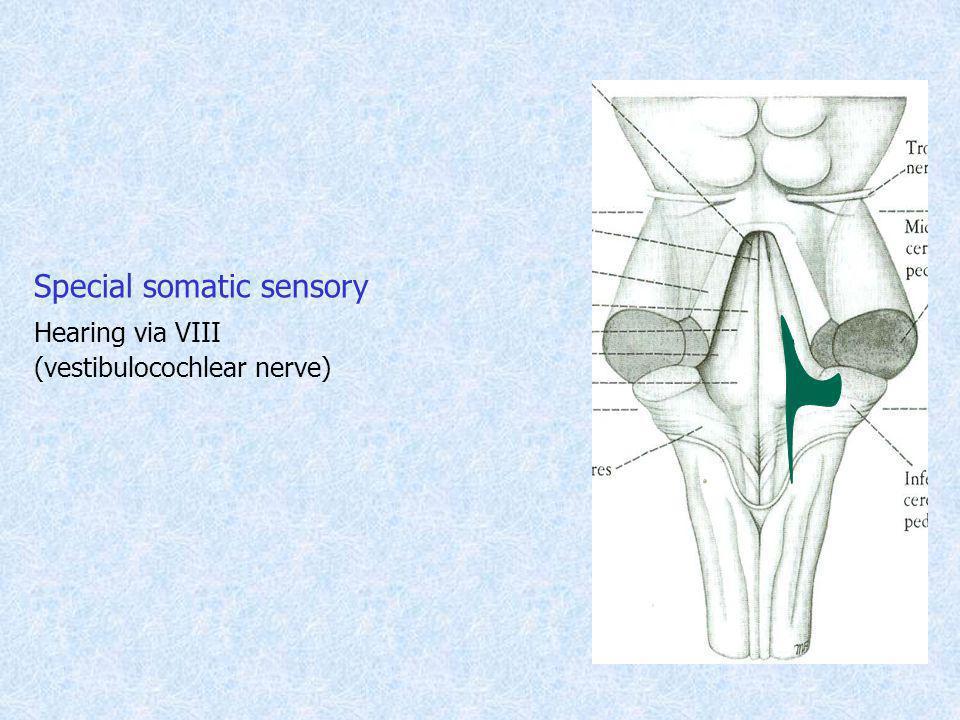 Special somatic sensory