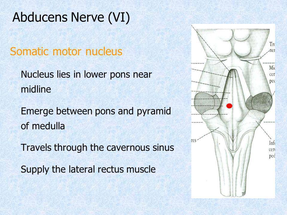 Abducens Nerve (VI) Somatic motor nucleus