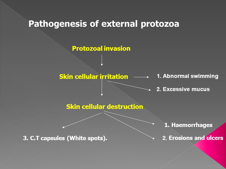 Pathogenesis of external protozoa Skin cellular irritation