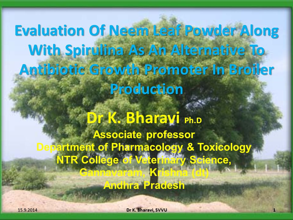 Evaluation Of Neem Leaf Powder Along With Spirulina As An Alternative To Antibiotic Growth Promoter In Broiler Production