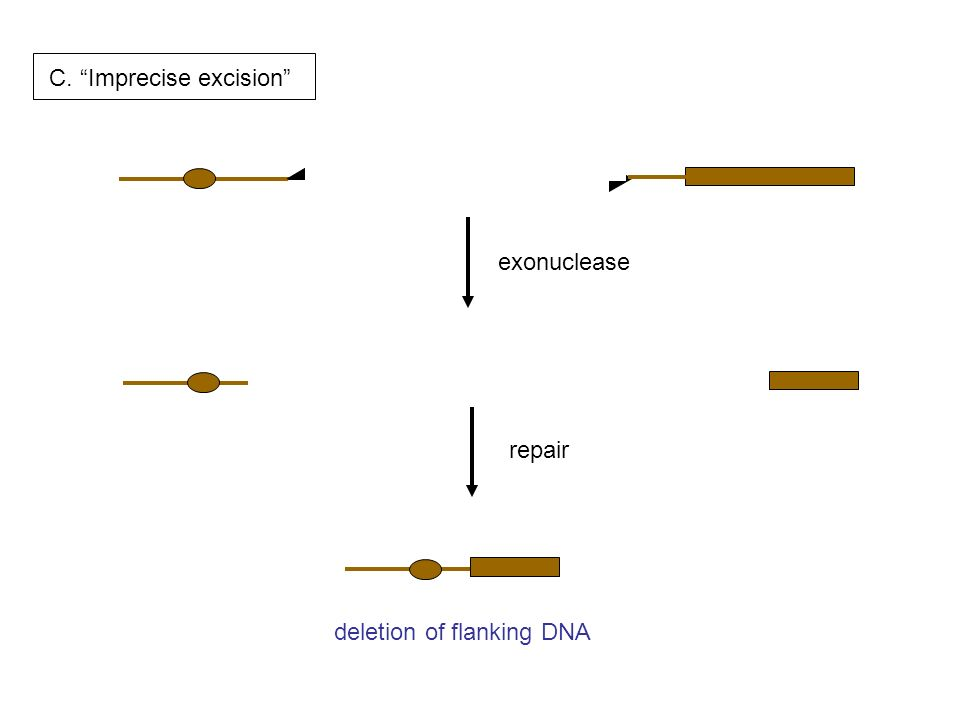 deletion of flanking DNA