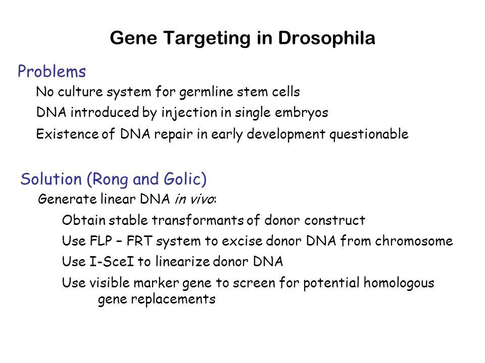 Gene Targeting in Drosophila