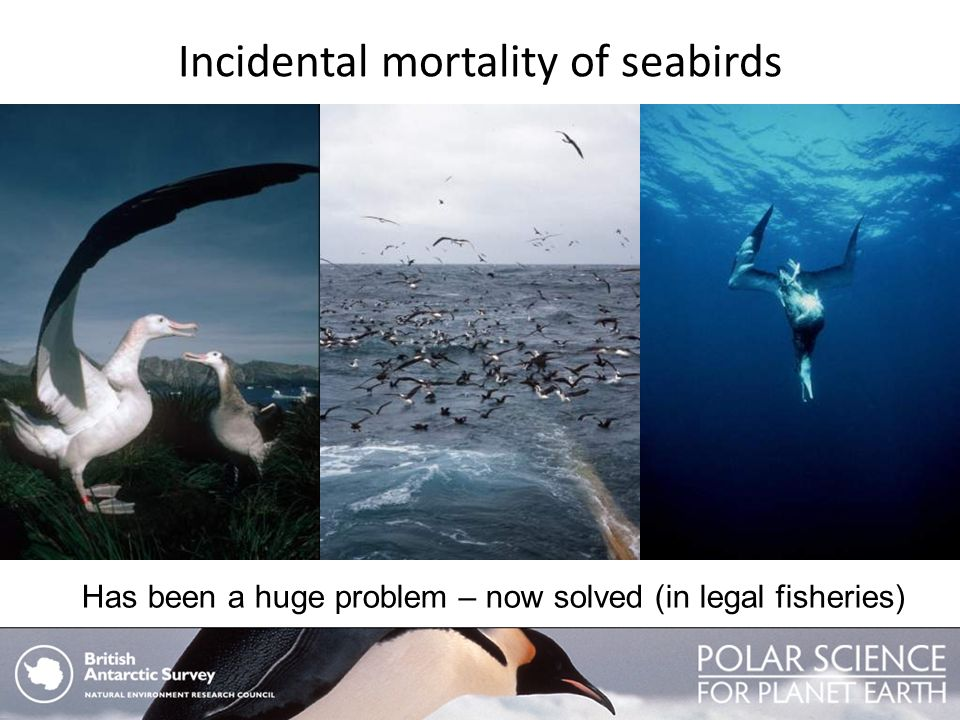 Incidental mortality of seabirds