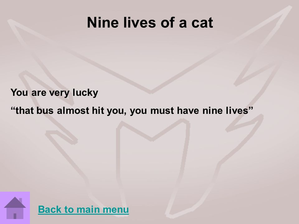 Nine lives of a cat You are very lucky