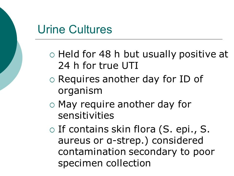 Urine Cultures Held for 48 h but usually positive at 24 h for true UTI