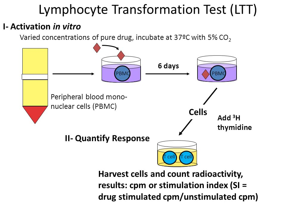 Lymphocyte Transformation Test (LTT)