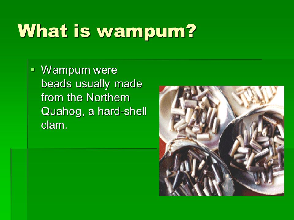 What is wampum Wampum were beads usually made from the Northern Quahog, a hard-shell clam.