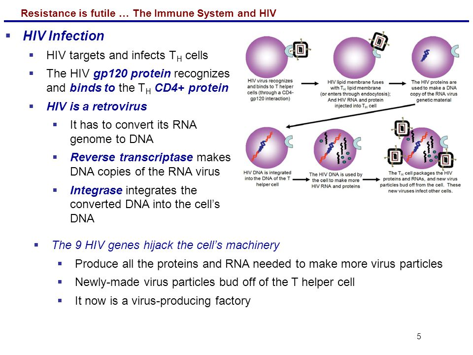 HIV Infection HIV targets and infects TH cells