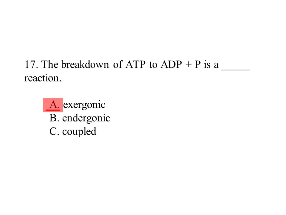 17. The breakdown of ATP to ADP + P is a _____ reaction. A. exergonic B. endergonic C. coupled