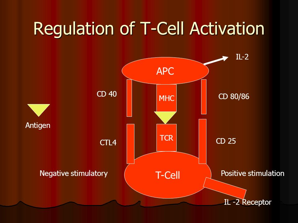 Regulation of T-Cell Activation