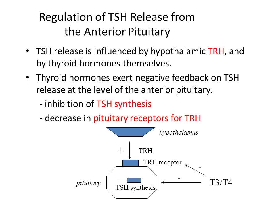 Regulation of TSH Release from the Anterior Pituitary