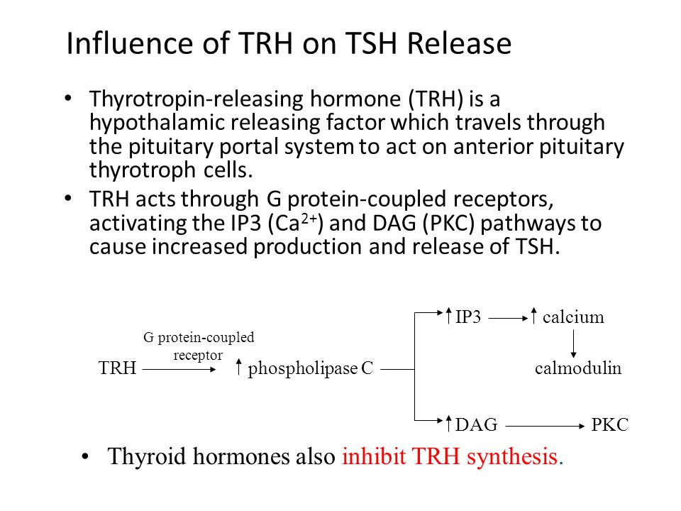 Influence of TRH on TSH Release