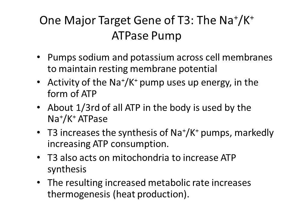 One Major Target Gene of T3: The Na+/K+ ATPase Pump
