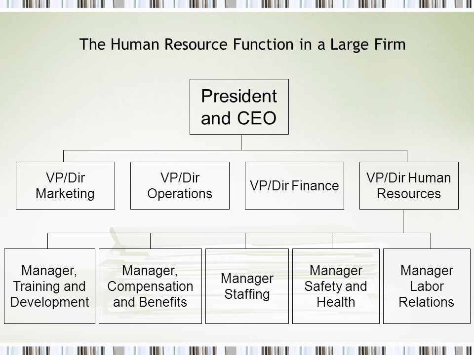 The Human Resource Function in a Large Firm
