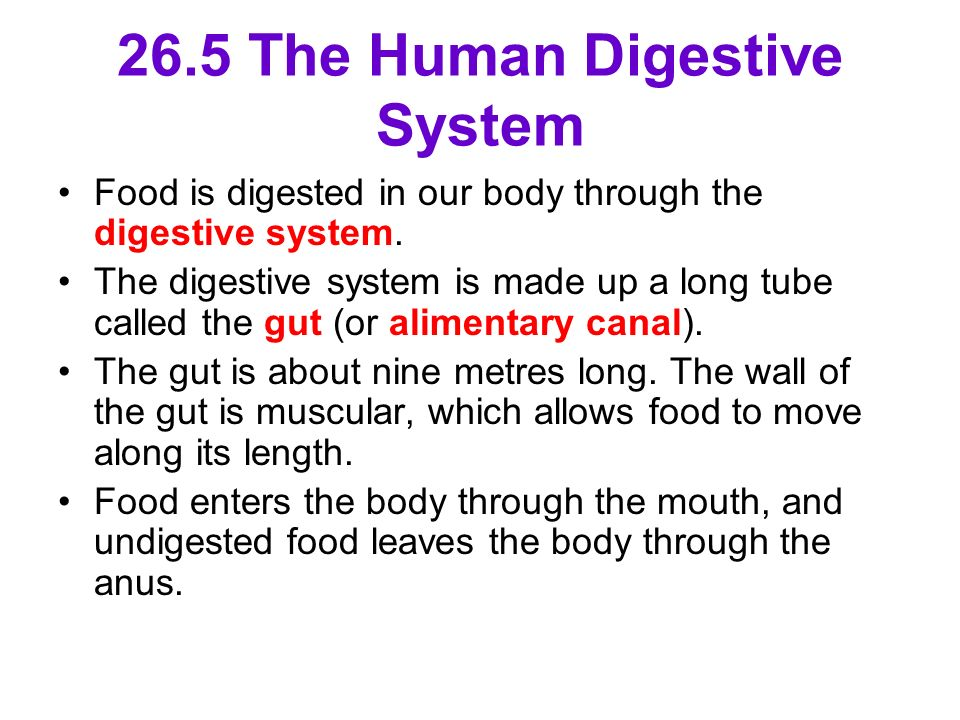 26.5 The Human Digestive System