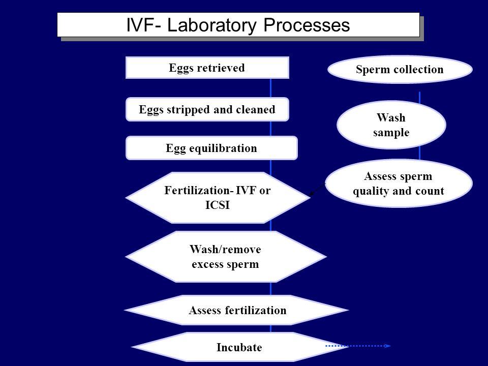 IVF- Laboratory Processes
