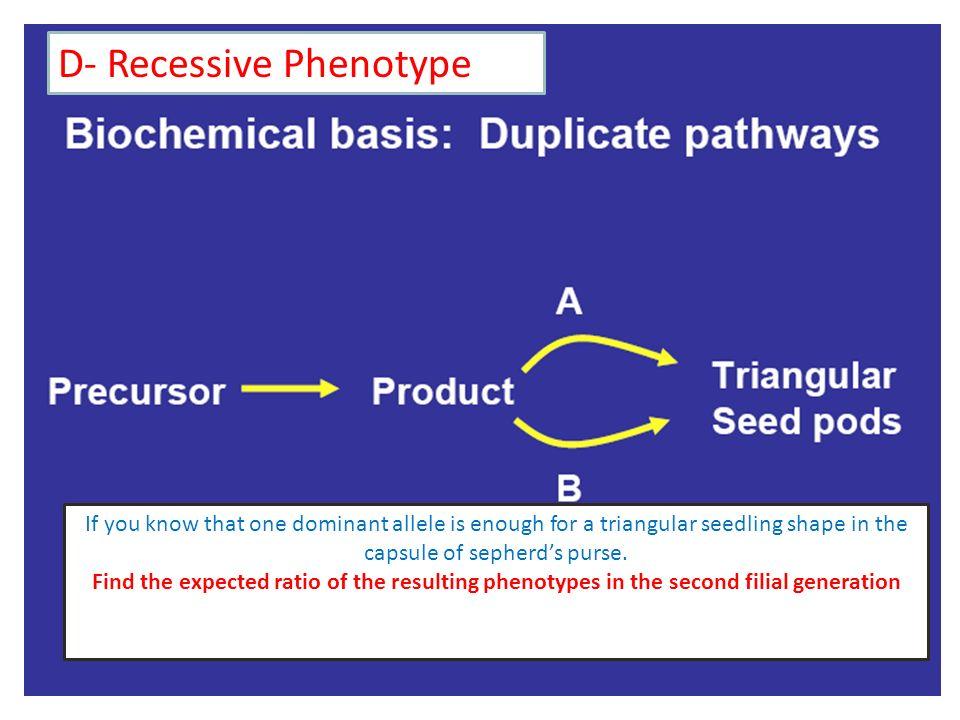 D- Recessive Phenotype
