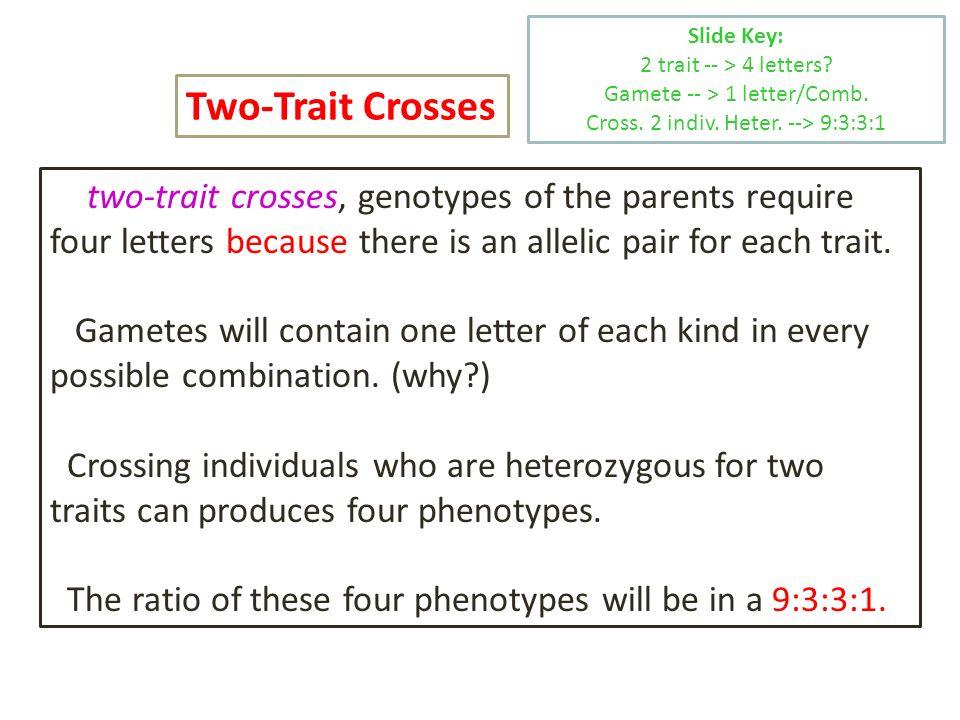 Slide Key: 2 trait -- > 4 letters Gamete -- > 1 letter/Comb. Cross. 2 indiv. Heter. --> 9:3:3:1.