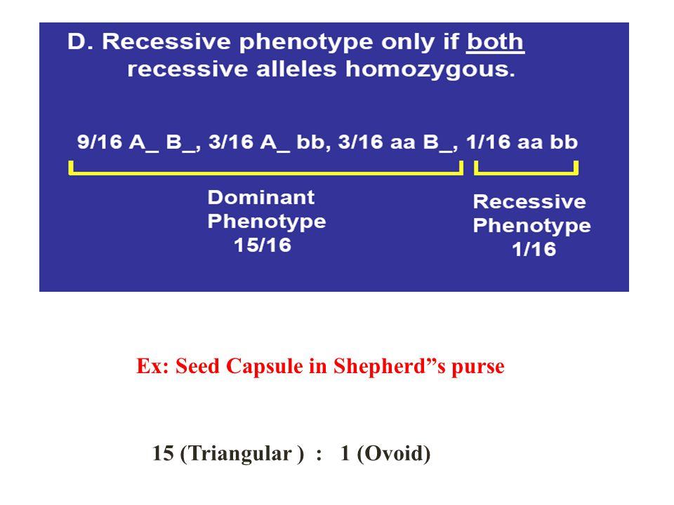 Ex: Seed Capsule in Shepherd s purse