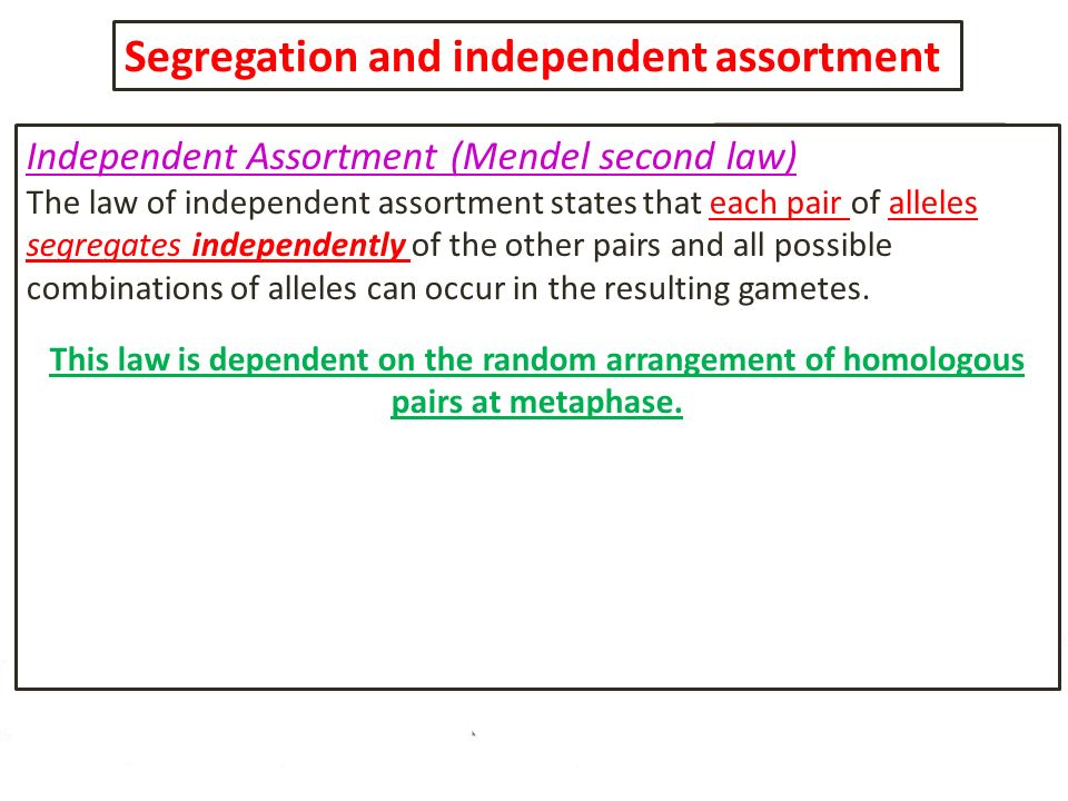 Segregation and independent assortment