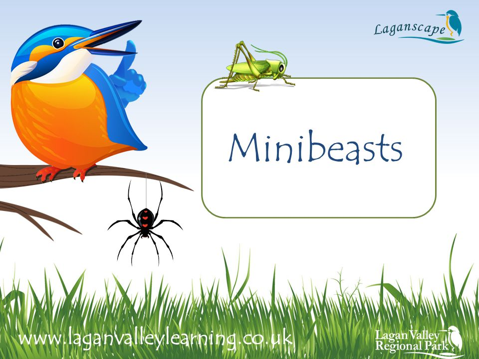 Minibeasts www.laganvalleylearning.co.uk