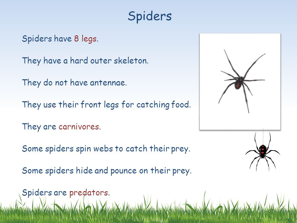 Spiders Spiders have 8 legs. They have a hard outer skeleton.