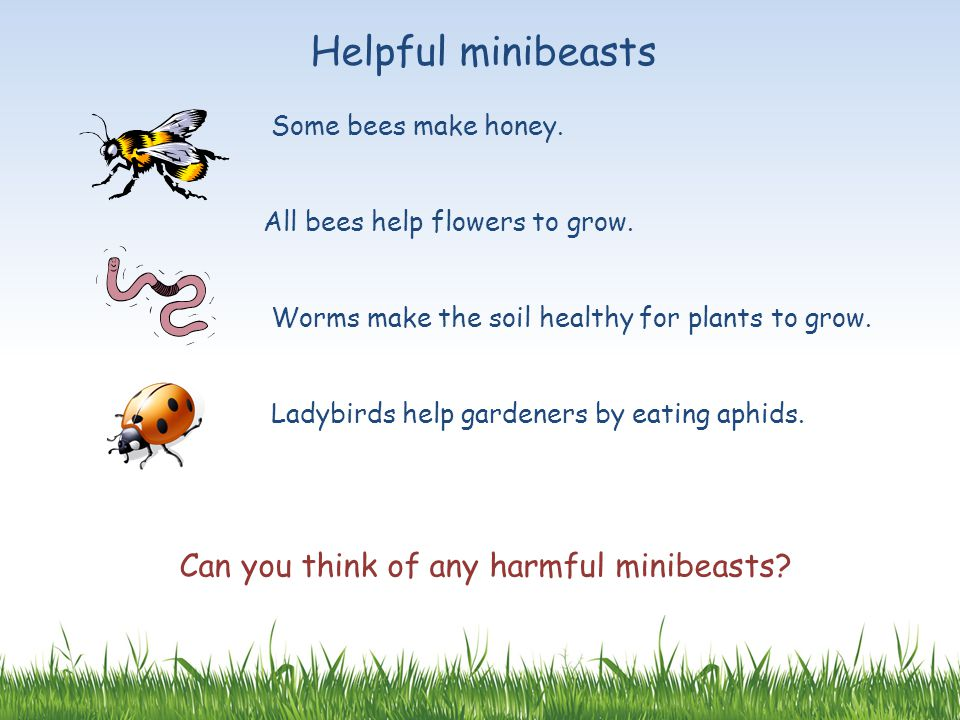 Can you think of any harmful minibeasts