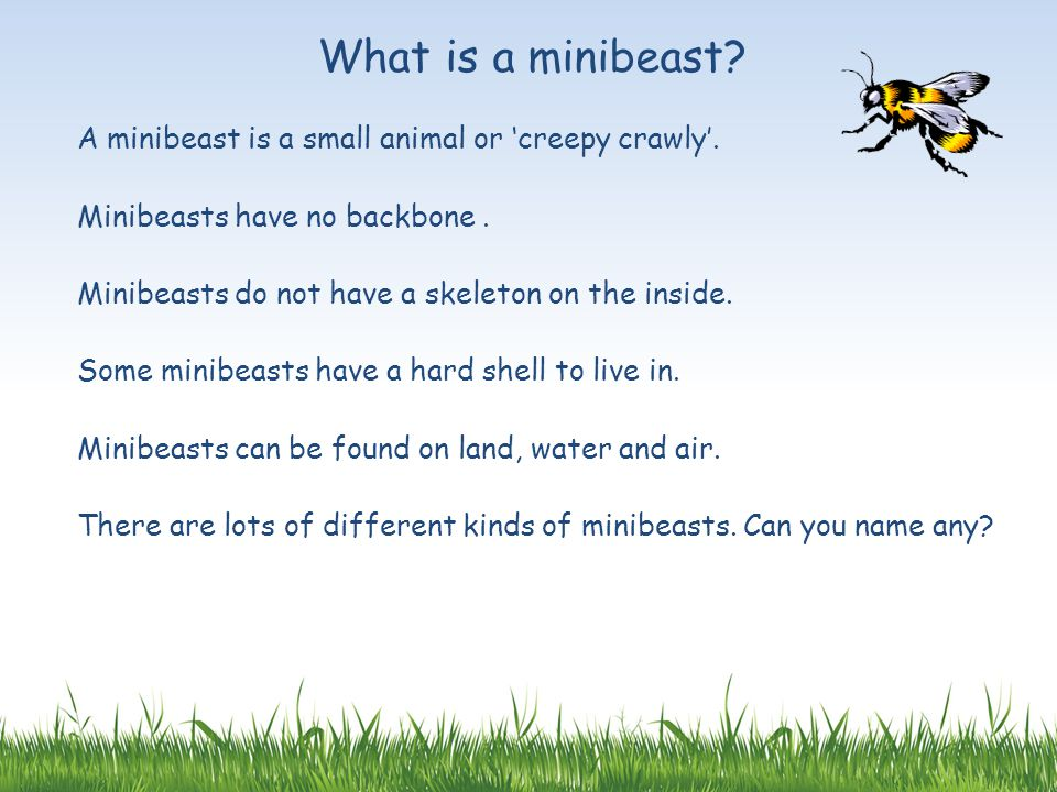 What is a minibeast A minibeast is a small animal or 'creepy crawly'.