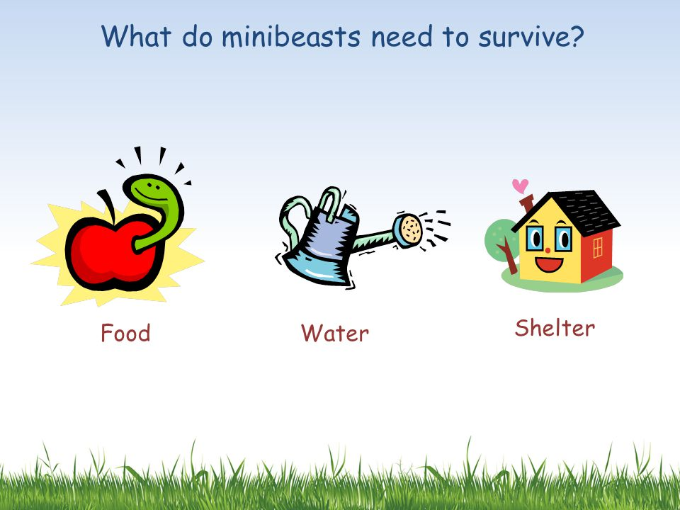 What do minibeasts need to survive