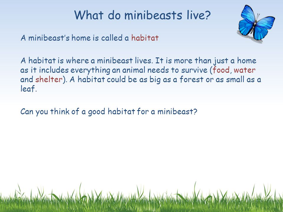 What do minibeasts live