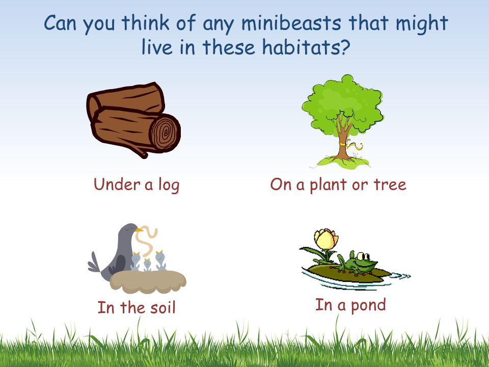 Can you think of any minibeasts that might live in these habitats