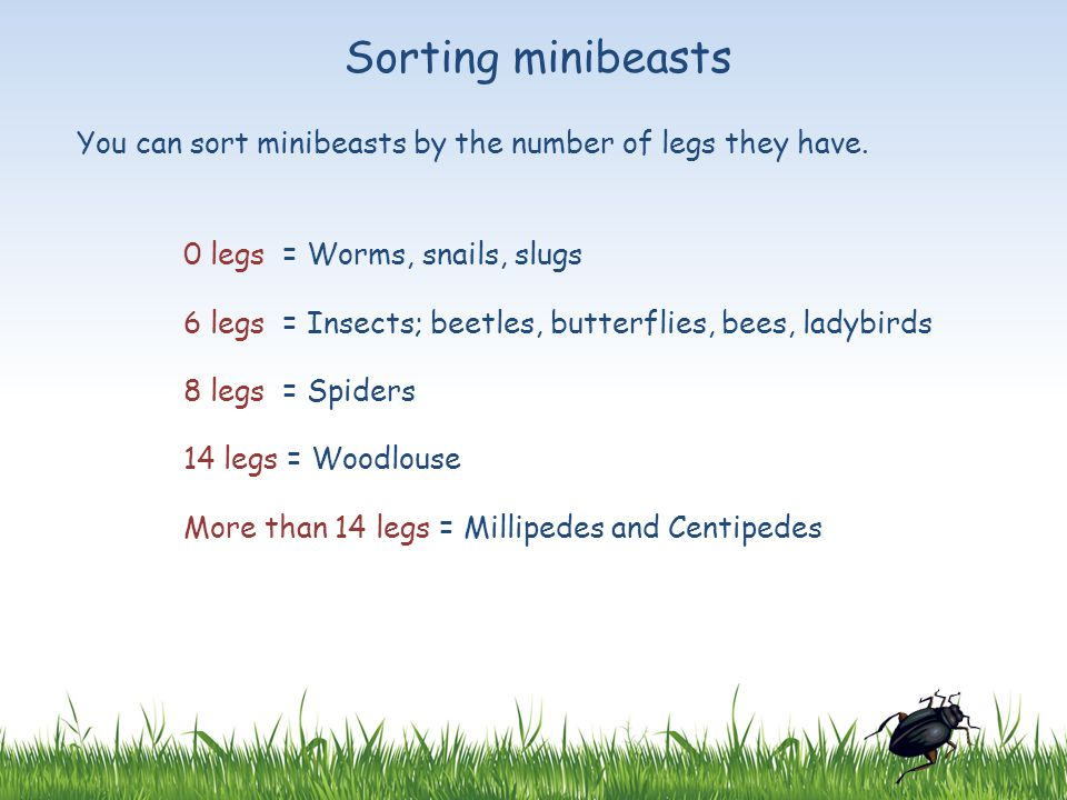 Sorting minibeasts You can sort minibeasts by the number of legs they have. 0 legs = Worms, snails, slugs.
