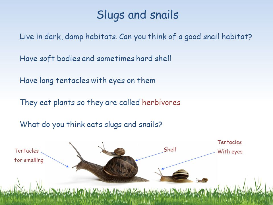 Slugs and snails Live in dark, damp habitats. Can you think of a good snail habitat Have soft bodies and sometimes hard shell.