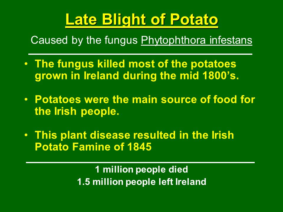 Late Blight of Potato Caused by the fungus Phytophthora infestans