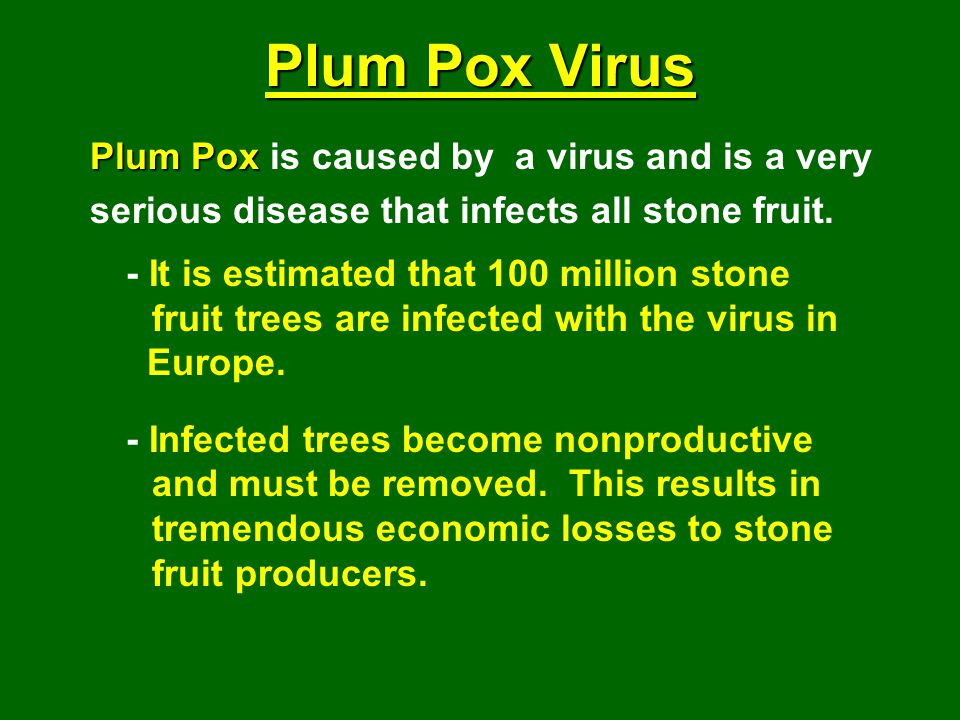 Plum Pox Virus Plum Pox is caused by a virus and is a very