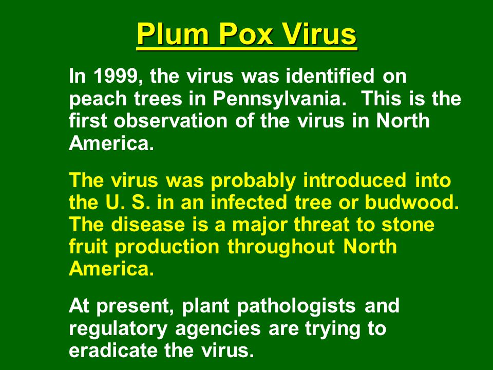 Plum Pox Virus In 1999, the virus was identified on peach trees in Pennsylvania. This is the first observation of the virus in North America.