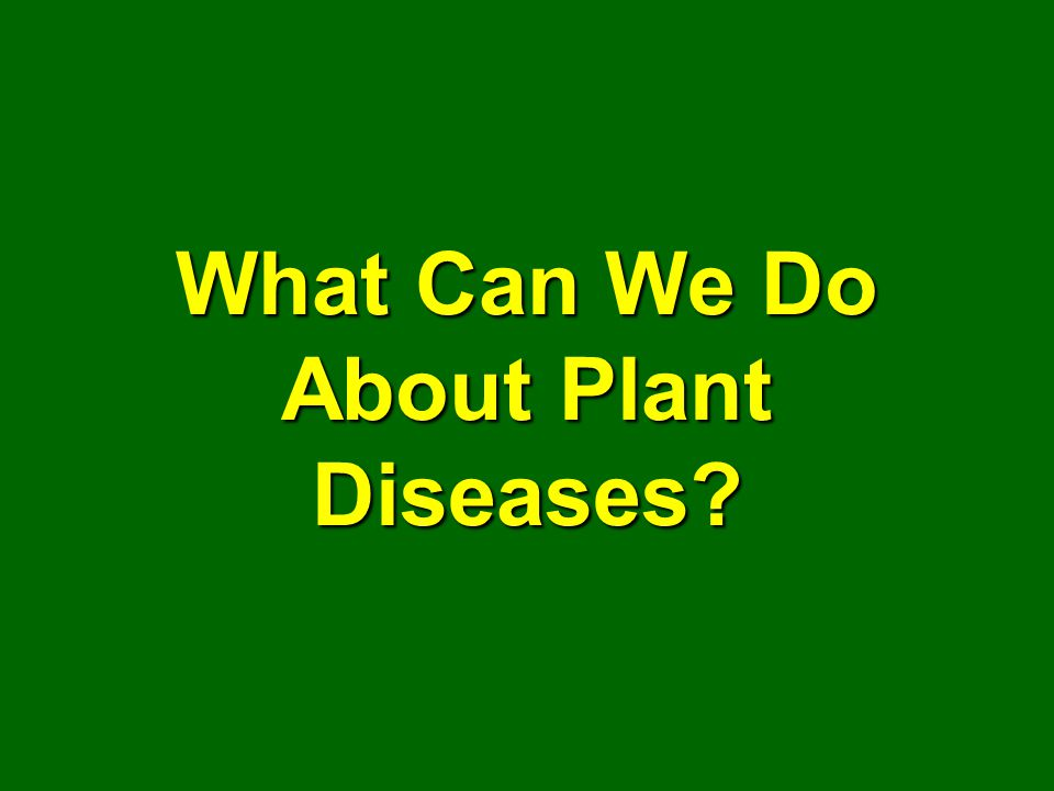 What Can We Do About Plant Diseases