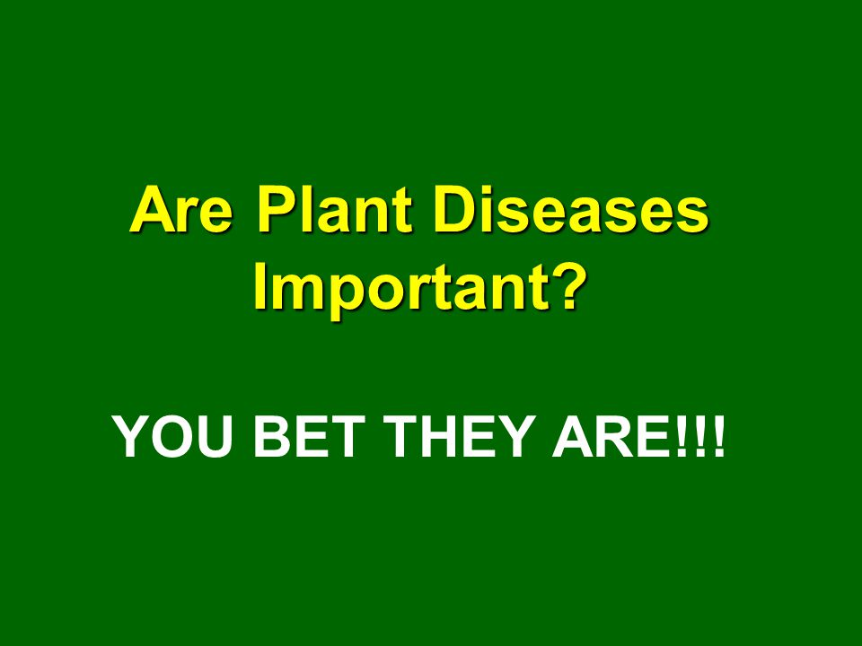 Are Plant Diseases Important YOU BET THEY ARE!!!