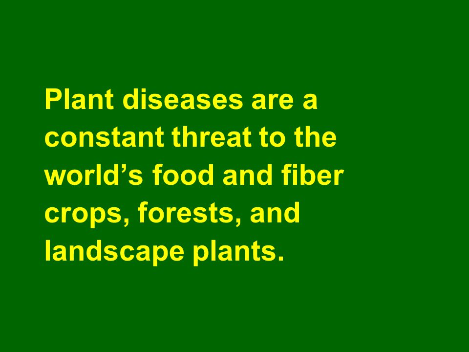 Plant diseases are a constant threat to the. world's food and fiber.