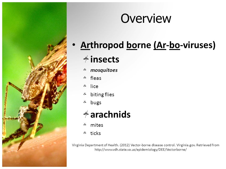 Overview Arthropod borne (Ar-bo-viruses) insects arachnids mosquitoes