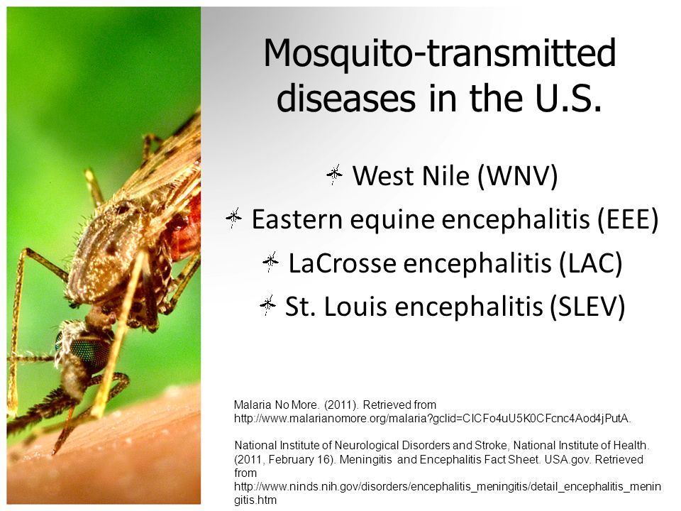 Mosquito-transmitted diseases in the U.S.
