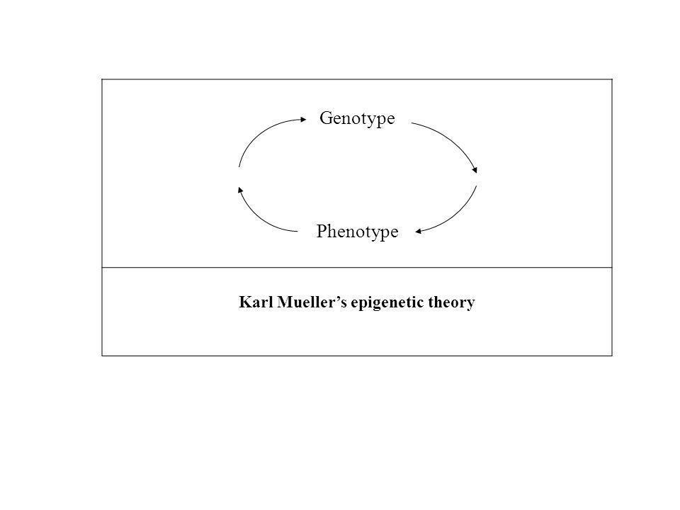 Karl Mueller's epigenetic theory