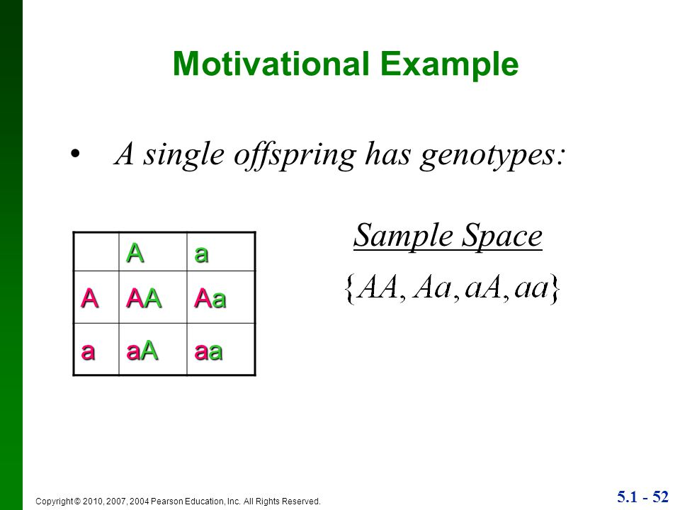 A single offspring has genotypes: Sample Space