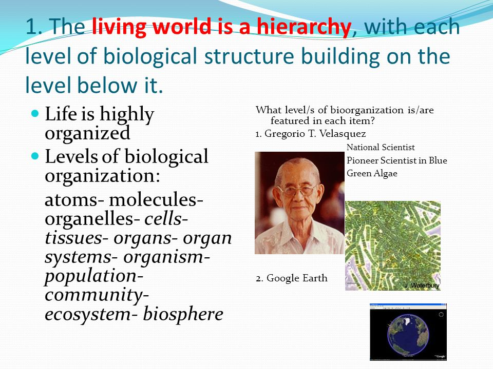 1. The living world is a hierarchy, with each level of biological structure building on the level below it.