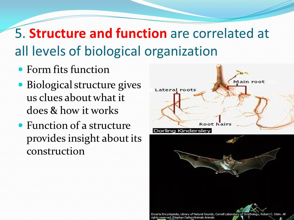 5. Structure and function are correlated at all levels of biological organization